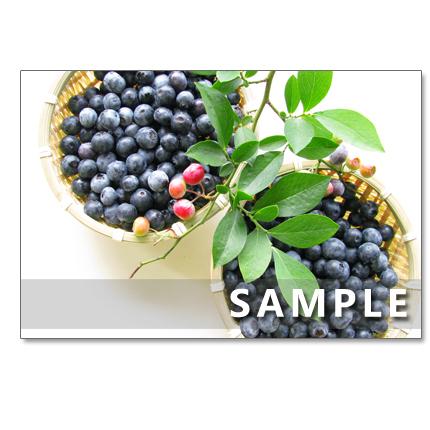 1081)美味しいブルーベリー   5枚選べるポストカード