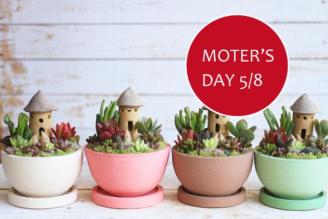 【母の日】ベージュ多肉植物箱庭風寄せ植え