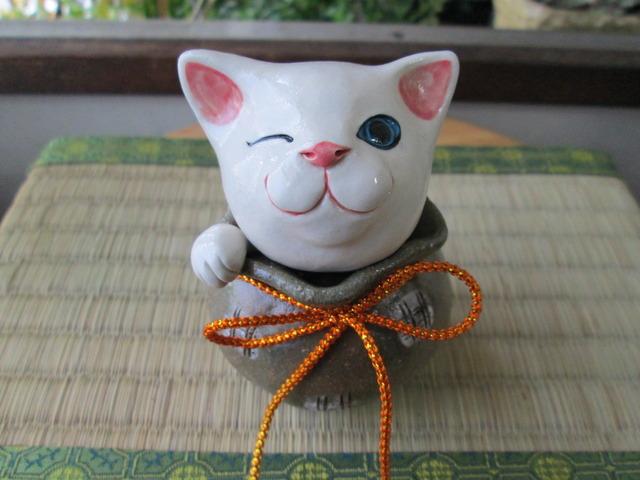 猫きんちゃく(白)