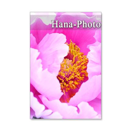 1086) 牡丹、藤、鯛釣草、石楠花  ポストカード5枚セット