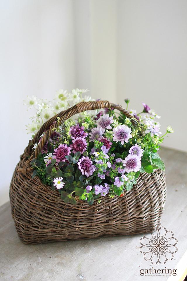 ダブル咲きオステオの寄せ植えギャザリング