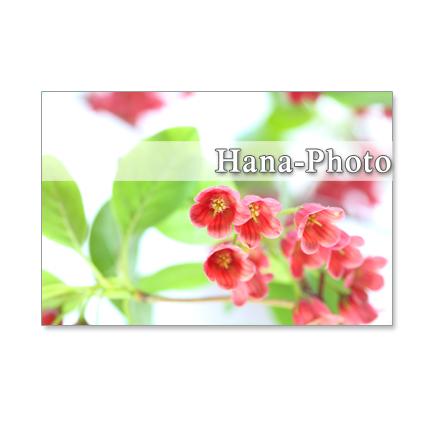 1087)  マロニエ、ユリノキ、紅更紗満天星、朴の木、 ポストカード5枚セット
