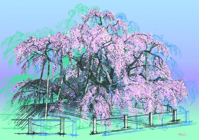 三春・滝桜【A4イラスト】