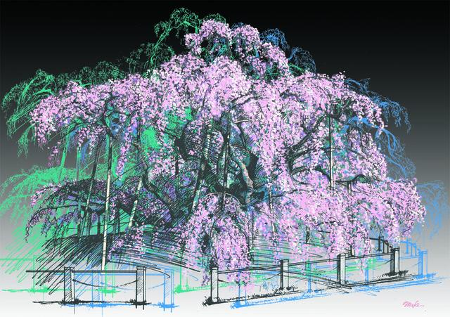 三春・滝桜 夜【A4イラスト】
