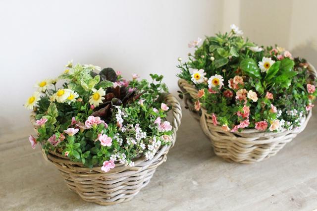 八重咲きカリブラコアとクローバーの寄せ植えギャザリングA
