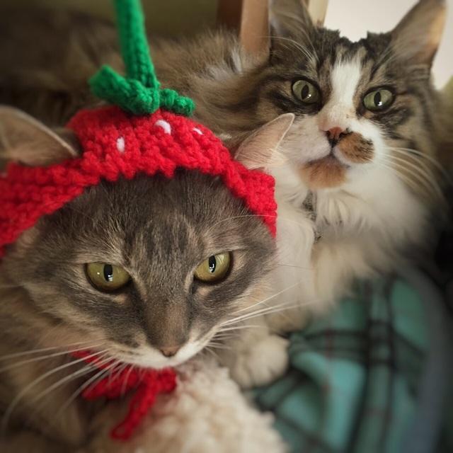 再3販☆送料込☆いちご帽子☆犬帽子☆猫帽子☆