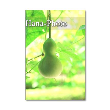 1090) 涼しげな緑のある風景   ポストカード5枚組