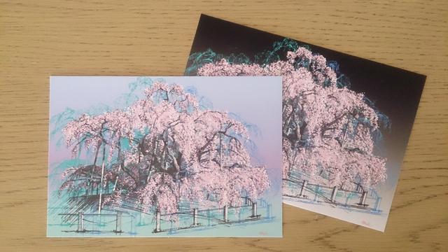 三春・滝桜 【ポストカード2枚】