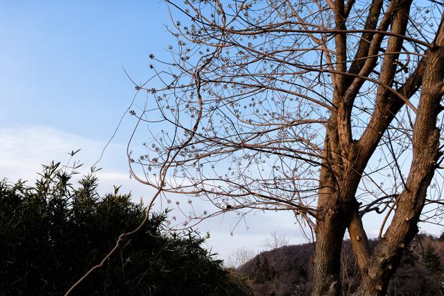 P002夕暮れの裸木(A4)