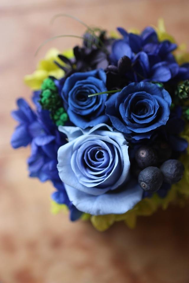Preserved Arrangement-BLUE-
