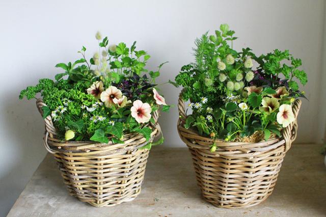 四季なりいちごとハーブの寄せ植えギャザリングA