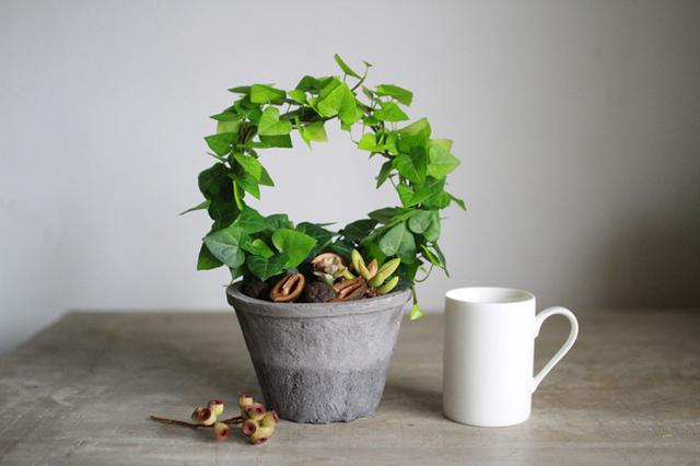 ハートアイビーリース+多肉植物寄せ植え