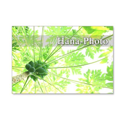1111) 爽やかな緑の風景    ポストカード5枚組