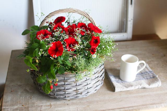 【1点物】ペチュニアといちごの赤い寄せ植えギャザリング