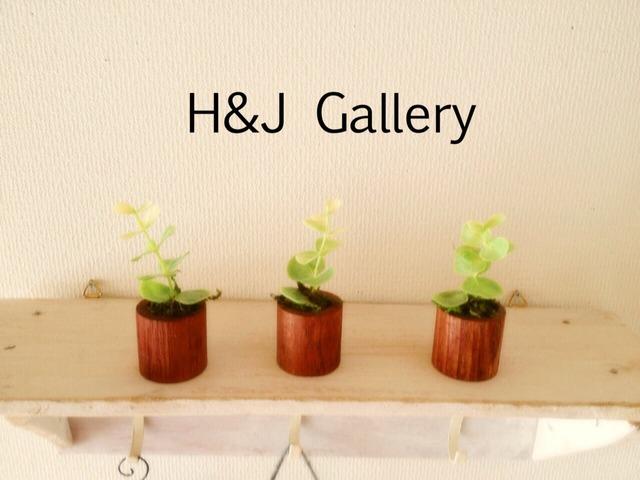 ☆小さな植木鉢*ユーカリ 茶