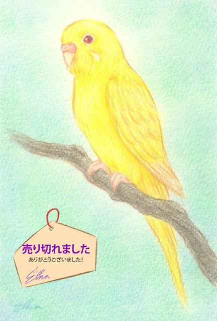 セキセイインコ・ルチノウ(160126)★手描き原画★