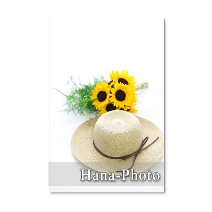 1123) ヒマワリ 2   ポストカード5枚組