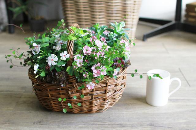 【1点物】ミニ日々草とペチュニアの寄せ植えギャザリング