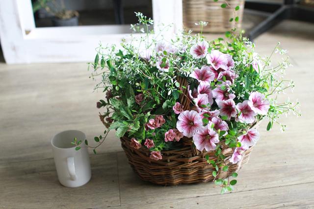 【1点物】ペチュニアVIVAとカリブラコアの寄せ植えギャザリング