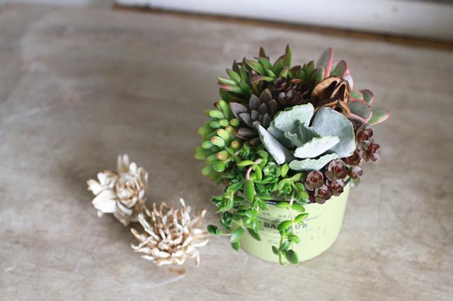 【1点物】グリーンポット多肉植物寄せ植え