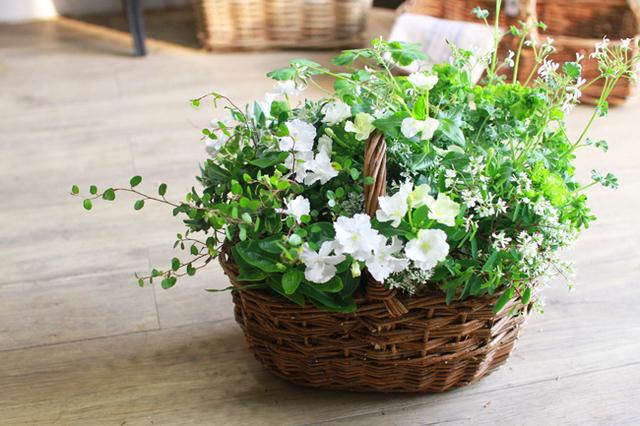 【1点物】日々草スクリューチュチュの寄せ植えギャザリング