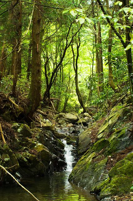P014八曽の森の水音(A4)