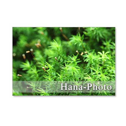 1131)  苔のある風景  ポストカード5枚組