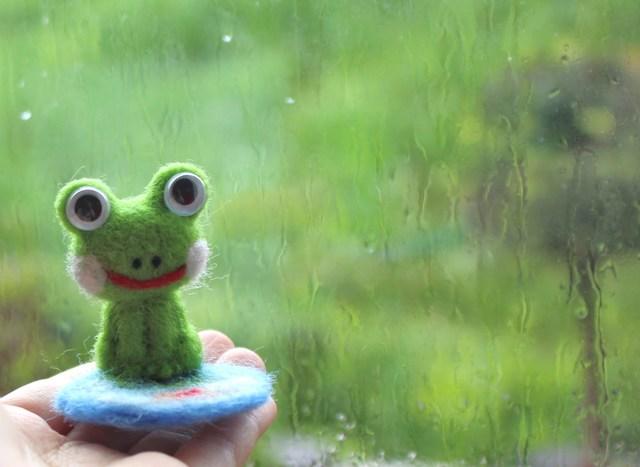 雨上がりの日のカエル