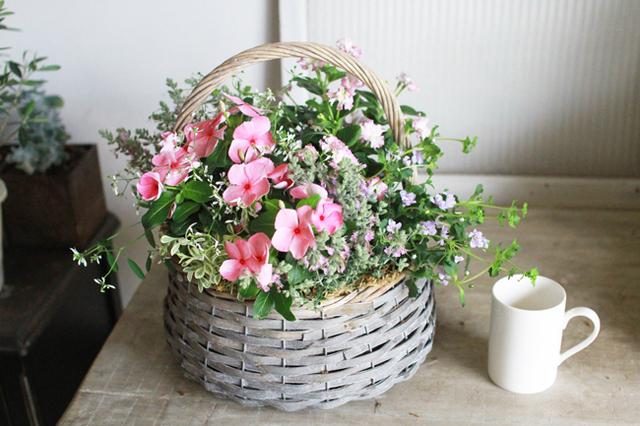 【1点物】変わり咲き日々草の寄せ植えギャザリング