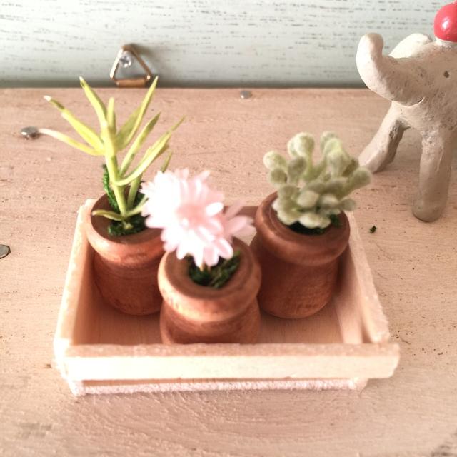 ミニ木製ミルクポットの植木鉢3個セット木箱入り