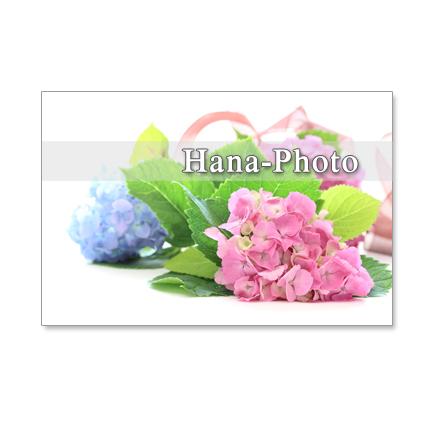 1134) 紫陽花 ピンクとブルー  ポストカード5枚組