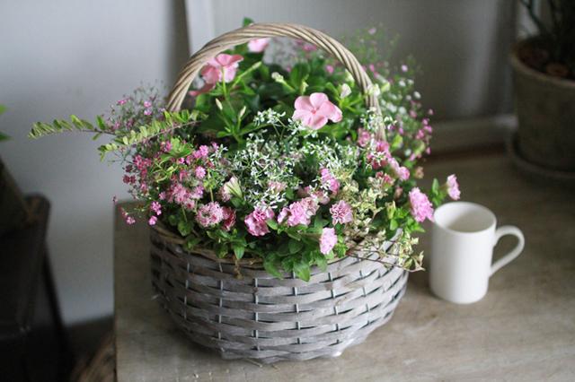 【1点物】八重咲きペチュニアと日々草のギャザリング