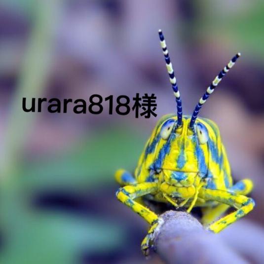 urara818様専用ページ