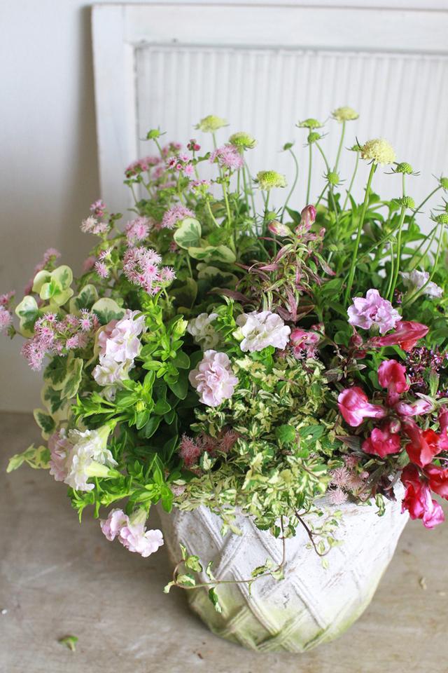 【1点物】八重咲きミニペチュニアのギャザリング