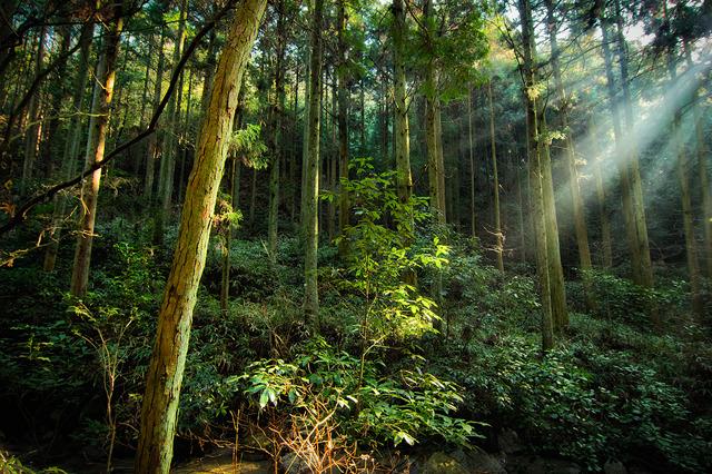P020森の朝(A4)