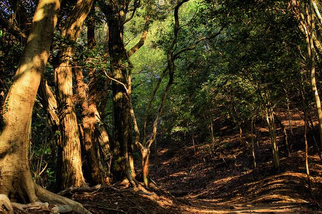 P021染まる樹々(A4)