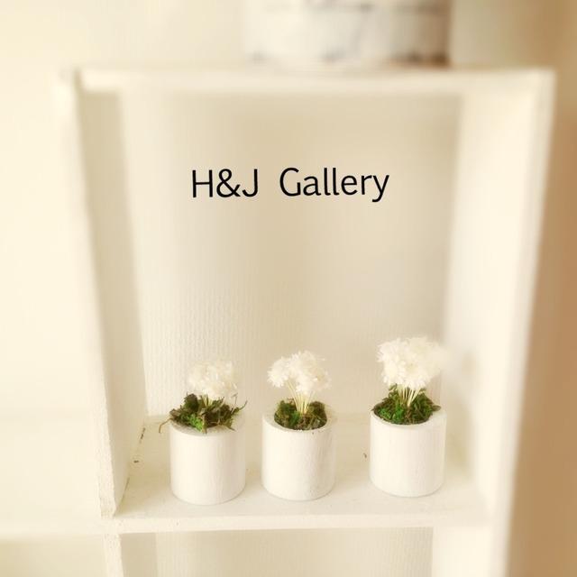 ☆小さな植木鉢*スターフラワー 白