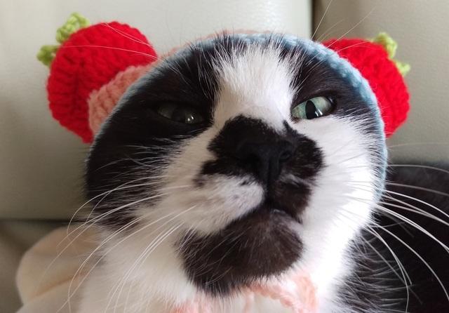 リボンとボタンつき☆ネコちゃんのぼうし☆猫ねこ帽子☆トマト☆いちご☆イチゴ☆苺☆野菜と果物シリーズ☆