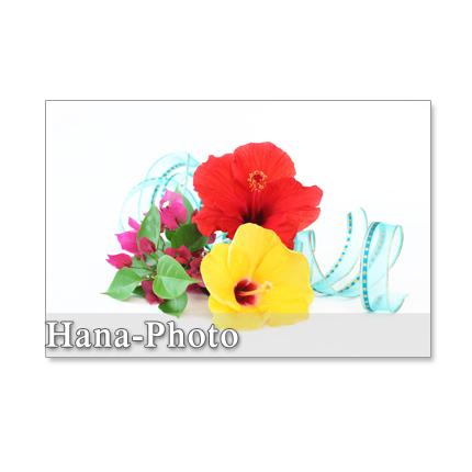 1146) 夏の花のアレンジメント ポストカード5枚組