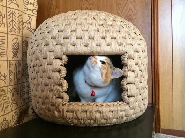 猫ちぐら  Mサイズ 受注製作品