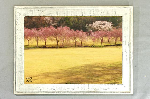 ow001桜並木(A4)オールドウッド額装写真