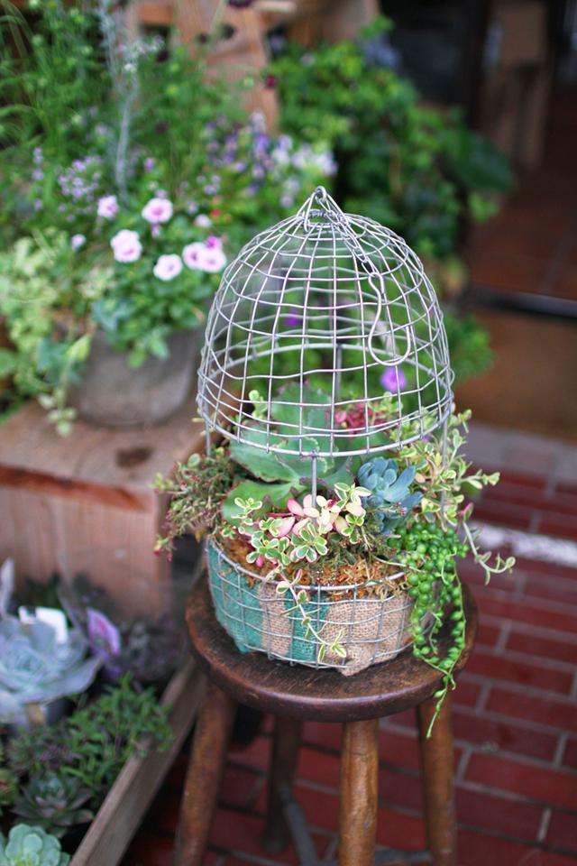 鳥かご多肉植物の寄せ植えギャザリング