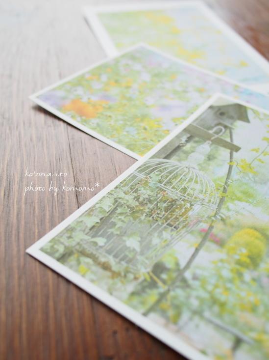 お花photo* ポストカード3枚set