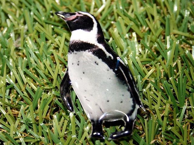 再販★ペンギン★ブローチ