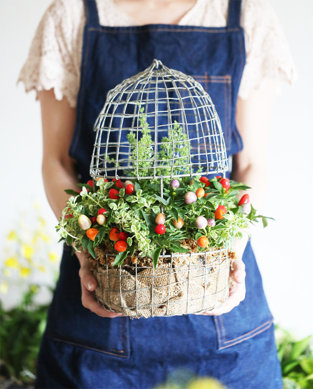 【1点もの】ゴシキトウガラシの寄せ植えギャザリング