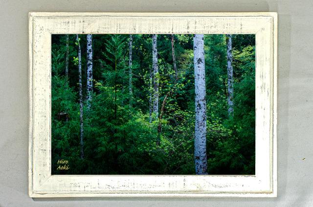 ow006夕暮れの森〜新緑(A4)オールドウッド額装写真