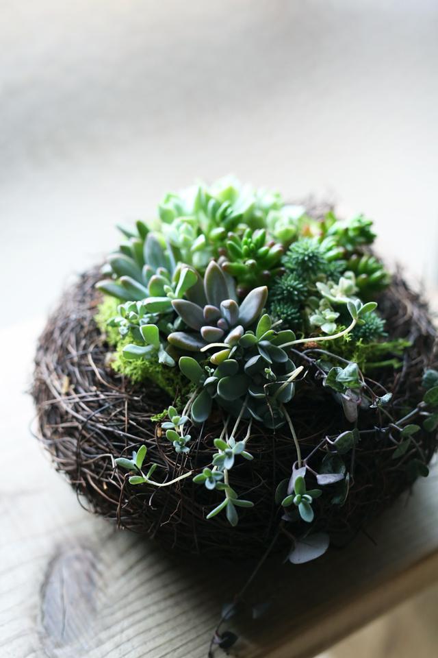 【再販】多肉植物とりの巣寄せ植え