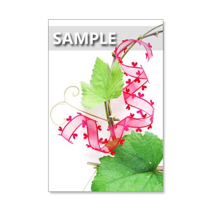 1164)秋の葉と花        5枚組ポストカード