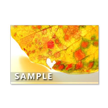 ★1176)  色鮮やかな秋!       ポストカード5枚組  再販1