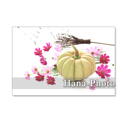 ★1180) ハロウィン 2       ポストカード5枚組  再販1